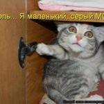Вся сущность котов в четырех картинках